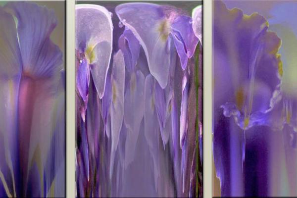EDV / Purple Triptyc
