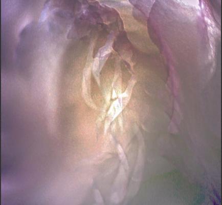 EDV / Purple