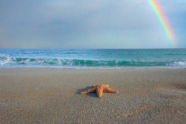 SD / starfish-rainbow