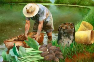Harvesting_20Taro_20Art_20Print_large