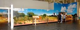 FS / Large Format Mural for the Niihau Exhibit